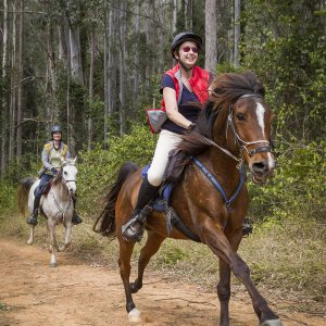 Gallop Through Kerewong State Forset Australian Horse Riding Holidays
