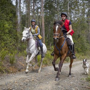 Australian Bush Horse Riding - Gallop Through NSW State Forests