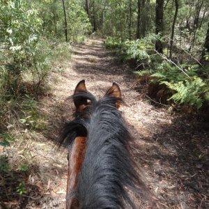 Riding Small Bush Trail In NSW Australia Horse Riding Holiday