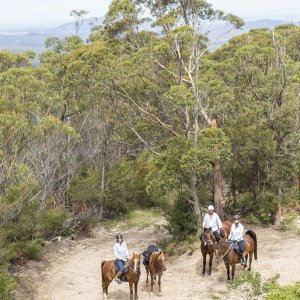 Comboyne Mountain Horse Riding Holidays NSW Australia