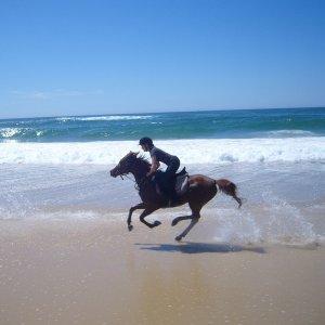 Aliya - Beach Horse Riding Australia NSW - Southern Cross Horse Treks