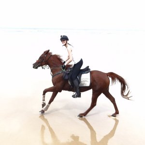 Aliya - Horse Riding Holidays Australia Port Maquarie Beaches NSW