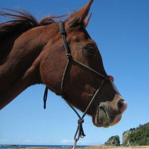 Aliya - Horse Riding Holidays Australia Port Macquarie, NSW Beach