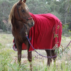 Kamal - Horse Care And Well-being Is Our Main Concern