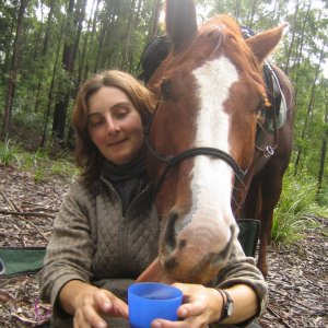Copper - Friendly Australian Trail Horse