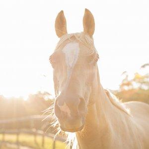 Finesse - Australian Adventure Horse Riding Holidays Port Macquarie NSW