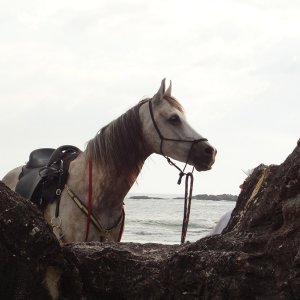Jimmy - Horse Riding Adventures Port Maquarie Beaches NSW Australia