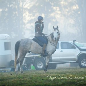Jimmy - Southern Cross Horse Treks Australia Endurance Horse Riding NSW