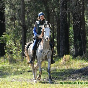 Jimmy - Horse Riding Holidays Australia Corindi Endurance Ride NSW
