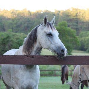 Jimmy - Horse Treks Australia Horse Riding Holidays Farmstay NSW