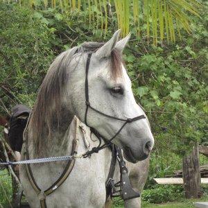 Jimmy - Australian Adventure Horse Riding Treks NSW Hinterland