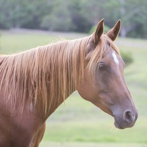 Kamal - Australian Adventure Horse Riding Holidays Near Port Macquarie NSW