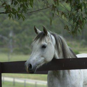 Romac Kiya - In The Early Days Of Southern Cross Horse Treks