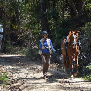 Horse Trekking Holidays For Experienced Horse Riders NSW Australia