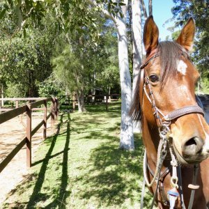 Arabian Horse Riding Holiday Australia Near Sydney NSW
