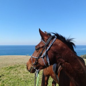 Nadal - Andalusian At Southern Cross Horse Treks Horse Riding Adventure Tours NSW Australia