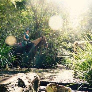Horse Trekking - Toby On Causeway