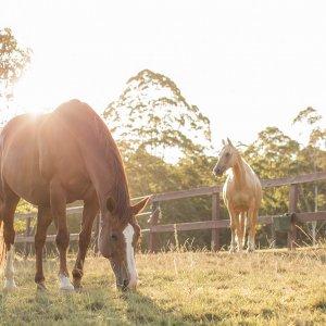 Horse Paddock - Horse Riding Holidays NSW Australia