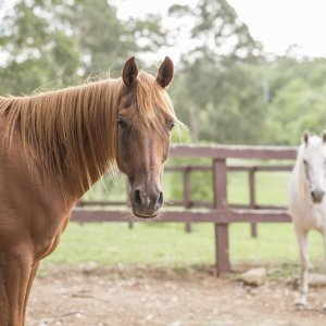 Horse Paddocks - Australian Horse Riding Adventure Holiday NSW