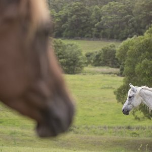 Horse Riding Farm - Riding Adventure Holiday Australia