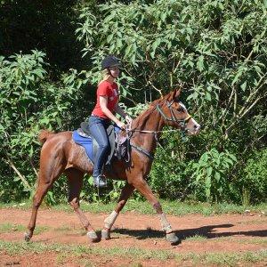 Aliya - Australian Arabian Horse Riding Holidays Port Macquarie Hinterland NSW