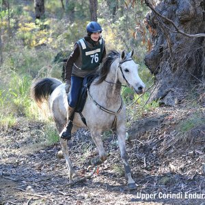 Jimmy - Endurance Horse Riding 2013 - Southern Cross Horse Treks Australia