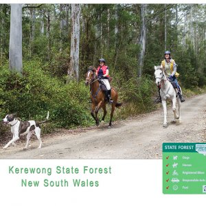 Horseriding Tours Kerewong State Forest NSW North Coast