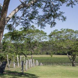 Bago Vineyards And Maze, Port Macquarie Region NSW Australia