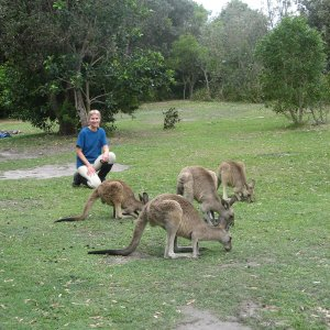 Australian Wildlife - Meeting Kangaroos
