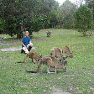 Australian Wildlife - Meeting Kangaroos