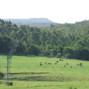 Horse Riding Holiday Farm Mountain And Rural Views - Adventure Tours Lorne Valley NSW Australia