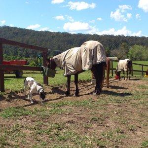 Horse Care Job - Water & Feeding On Quad Bike
