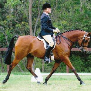 Southern Cross Horse Treks Horse Romac Valentino In Arabian Show (2010 - Photo By Kristin Carroll)