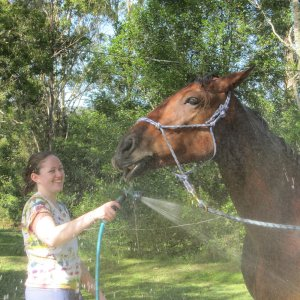 Australian Working Holiday With Horses