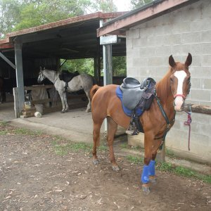 Horses Ready To Ride For Holiday Treks Australia