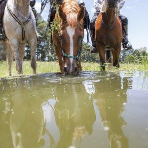 Horse Riding Adventure Trek Tours - Port Macquarie Hinterland - Comboyne NSW Australia