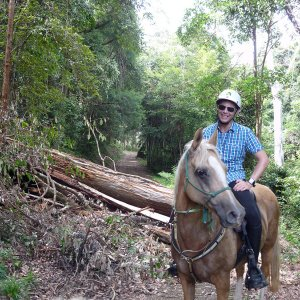 Horse Trail Riding Australian Bush North Coast Sydney Australia