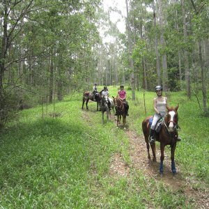 Horse Riders On Forest Trail - Hannam Vale To Comboyne Hinterland Trekking Loop