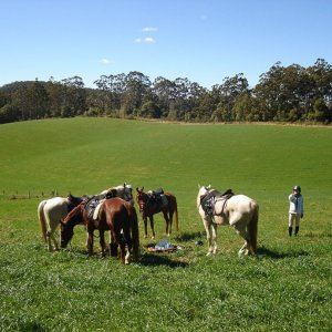Horse Riding Port Macquarie Hinterland Comboyne NSW