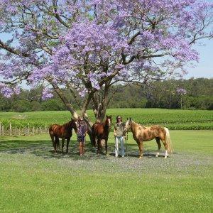 Bago Vineyards And Maze Near Port Macquarie NSW Australia