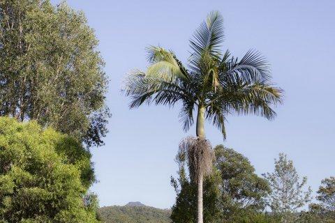 Kerewong Beautiful Farm Property Near Port Macquarie NSW Australia