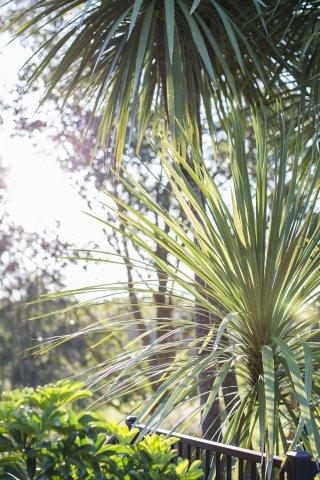 Mid North Coast NSW Sub Tropical Views