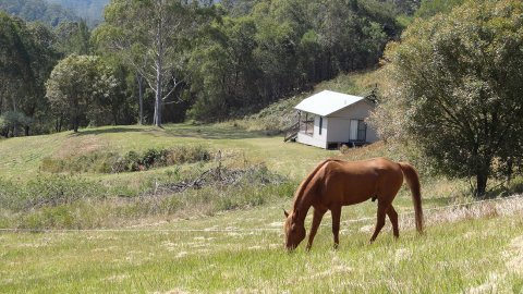 Studio Cabin Horse Riding Farm Holiday Australia NSW