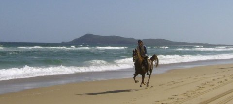 Kamal - Beach Horse Riding NSW - Southern Cross Horse Treks Australia