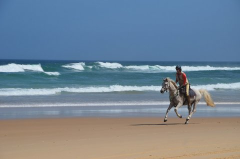 Horse Riding On The Beach North East Coast NSW - Horse Treks Australia