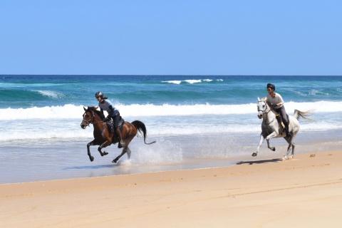 Adventures Horse Beach Holidays Australia NSW