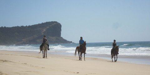 Small Group Horse Riding Beaches NSW - Horse Treks Australia