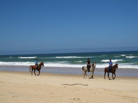 Horse Riding Beaches NSW Mid North Coast - Horse Treks Australia