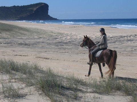 Australian Horse Trekking Holidays Port Macquarie Beaches NSW