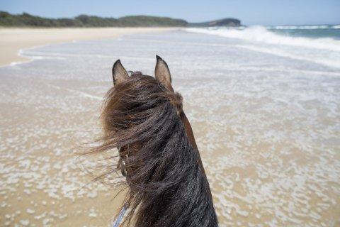 Beach Horse Riding Holidays Australia NSW- Southern Cross Horse Treks